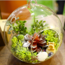 10cm Large Glass Hanging Terrarium